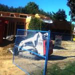 remodeling in development